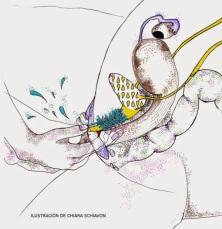 fragmento_ilustracion_chiara