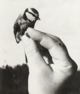 hot-adorable-awesome-bird-favim-com-537941
